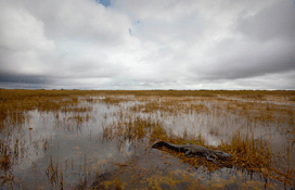 THUMB1110312727-Danielle-Austen-d_austen_shark-valley_everglades