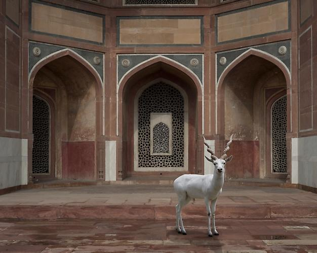 THE WITNESS, HUMAYUN'S TOMB, NEW DELHI.