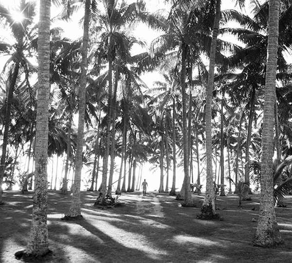 <em>Cook Island Palms</em>, Paul Bastin