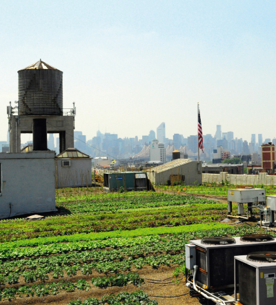 Brooklyn Grange, New York, from My Green City, Copyright: Gestalten, 2011