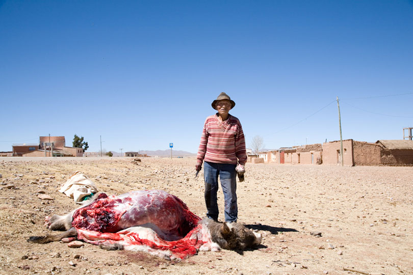 Old Man Butchering his mule after it getting killed by truck, on the Altiplano, Bolivia. © Andrew Geiger