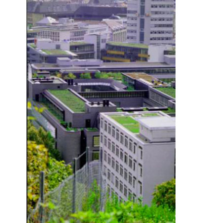 greenroofs cover Green Roofs