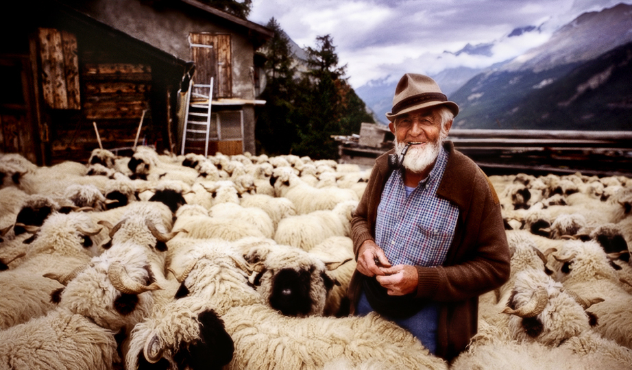<em>Switzerland Shepherd </em>, George Simhoni